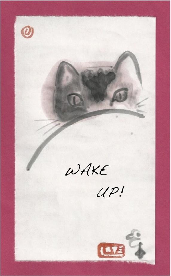 Calico wake up