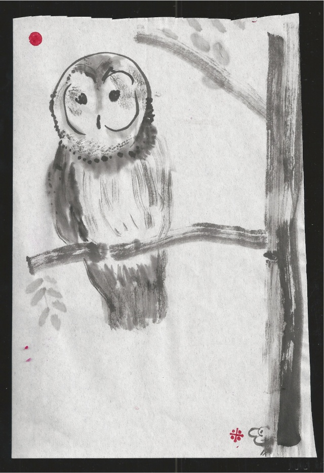 barred owl in branch