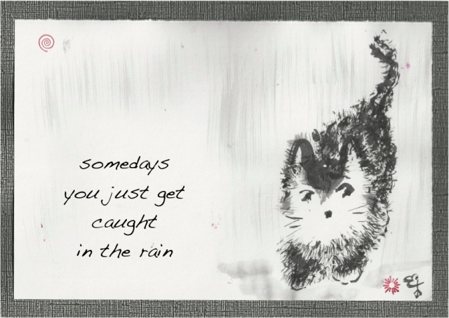 wet kitten some days rain