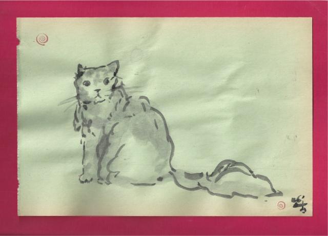 persian cat looks back