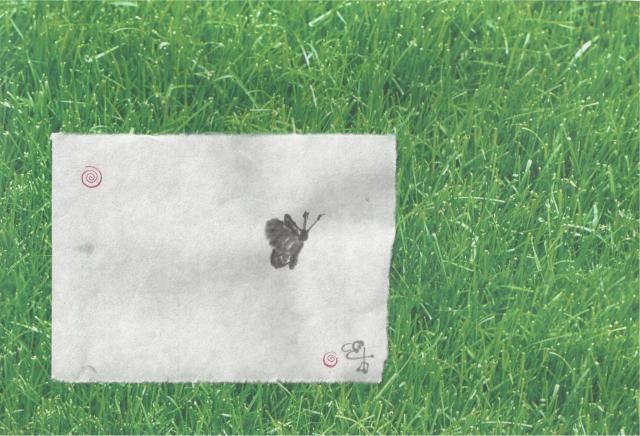 butterfly on lawn
