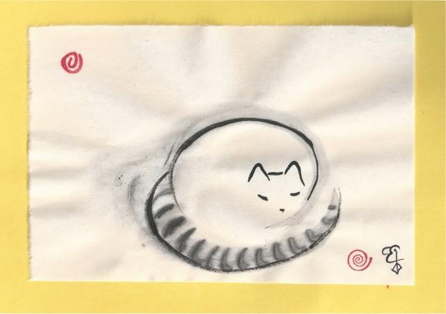 racoon cat