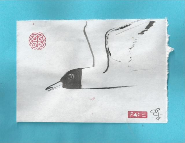 blackheaded sea gull