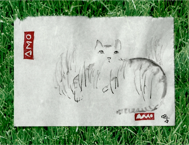 Grey tiger cat in grass