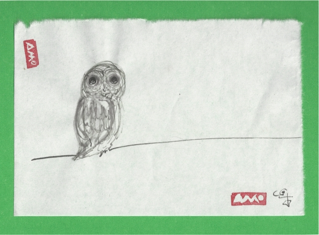 owl in the day