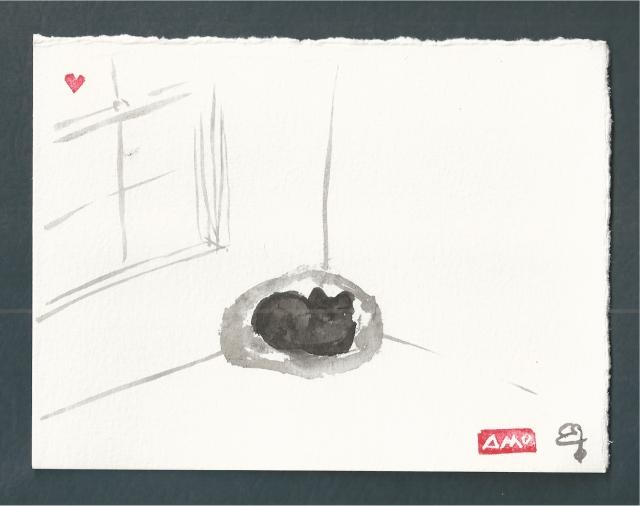presto black cat in corner