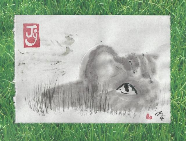 cat eye in grass