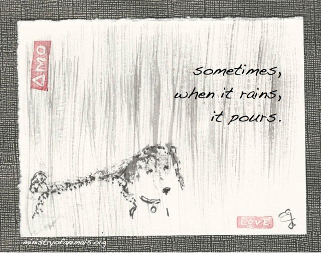 poodle in the rains it pours