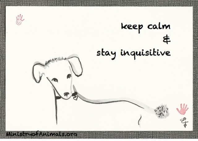 keep-calm-stay-inquisitve-poodle-terrier