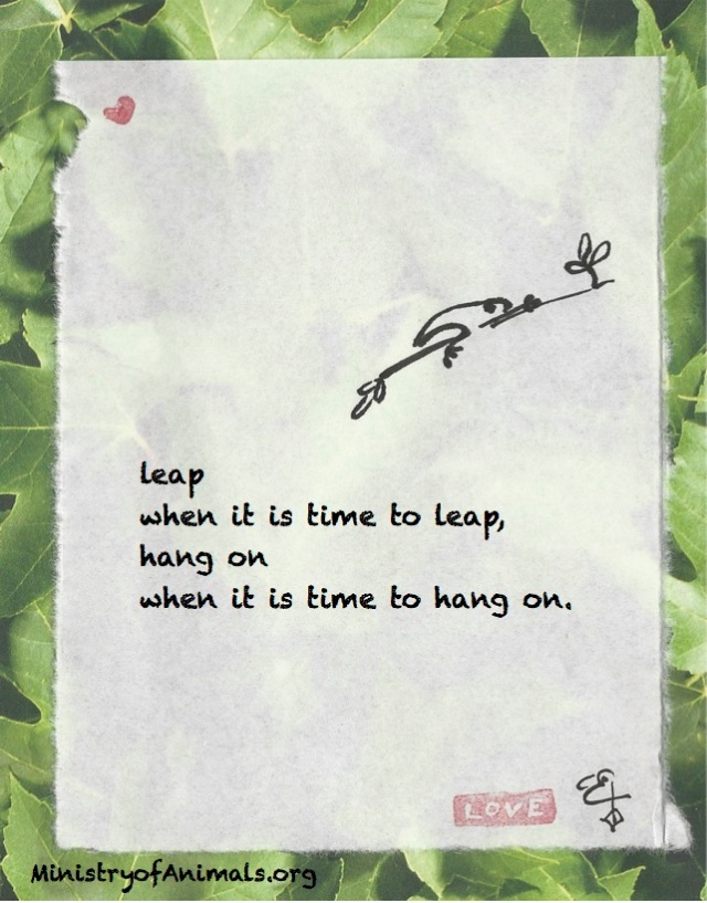 leap-hang-on-frog