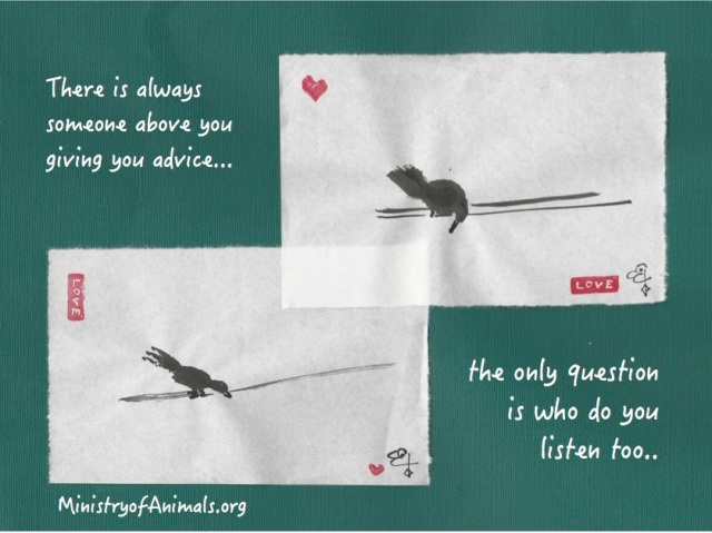 two birds giving advice