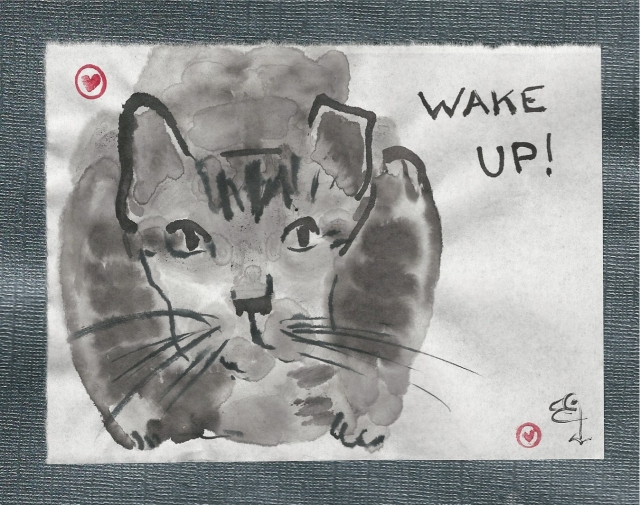 feral-cat-wake-up