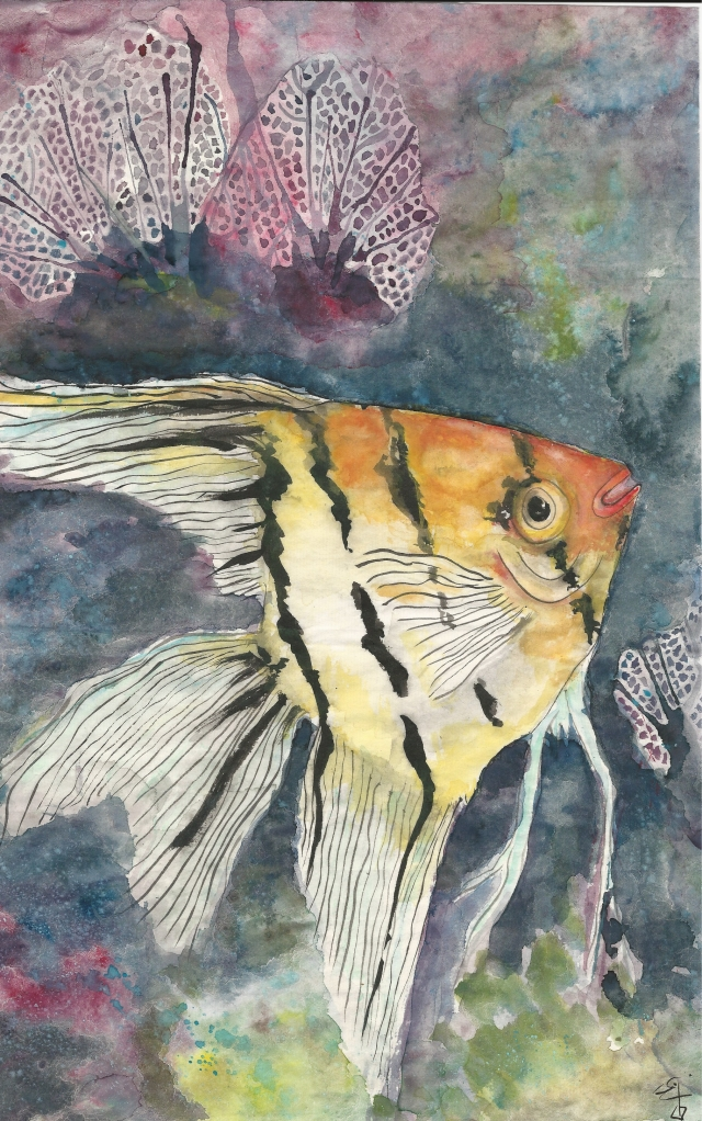 angel-fish-color