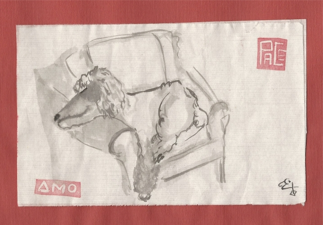 poodle-sleepin-in-chair